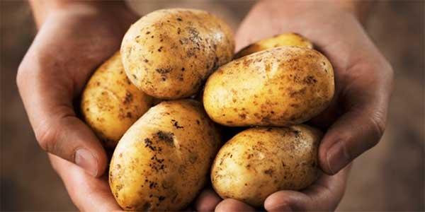 alcune-patate