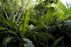 piante-alberi-foresta