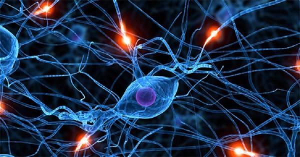 neurone in attività