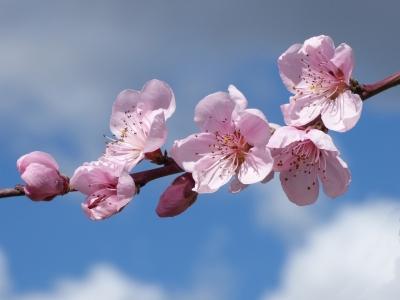 i processi della fioritura