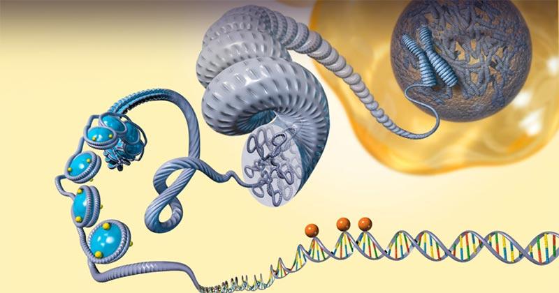 il DNA si lega agli istoni