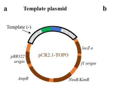 plasmide per l'editing