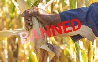 al bando gli OGM in Tanzania