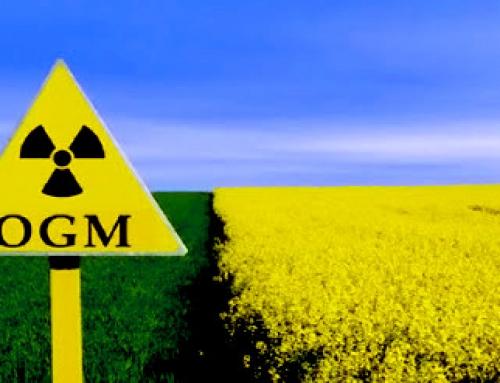 OGM: DA PIU' DI VENT'ANNI IN CAMPO, CON QUALI EFFETTI?