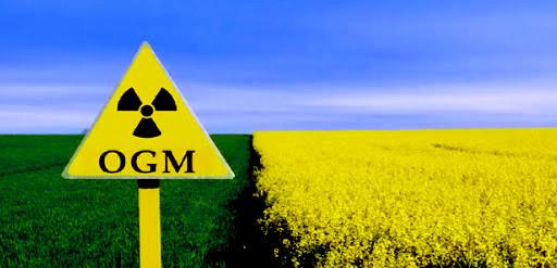 campi di OGM